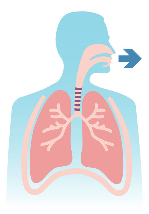 How Your Lungs Work The Lung Association